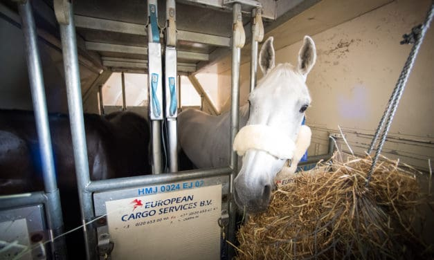 SAA Detects Early Inflammation in Horses Traveling by Air
