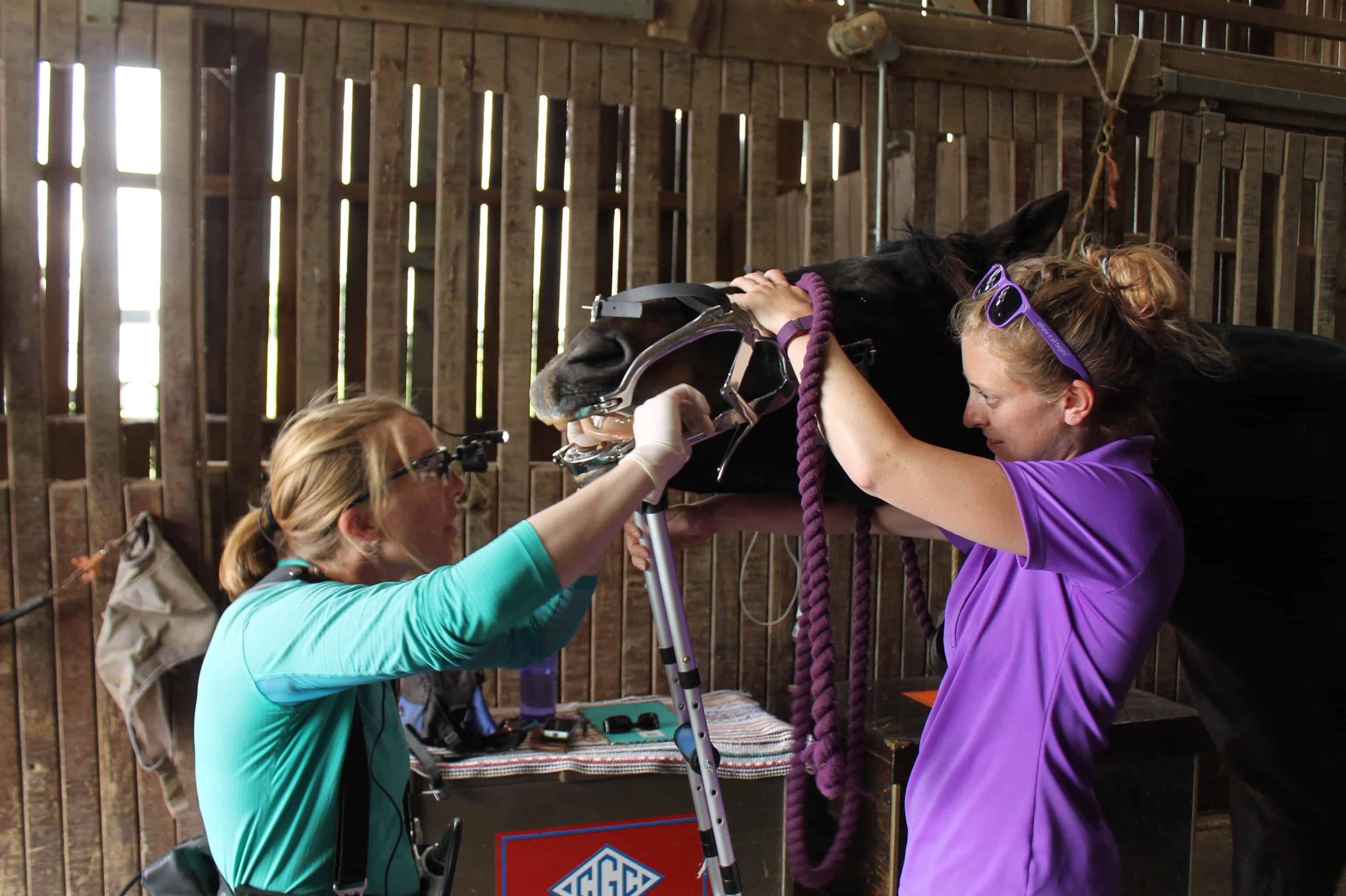 do i need a dental exam for my horse