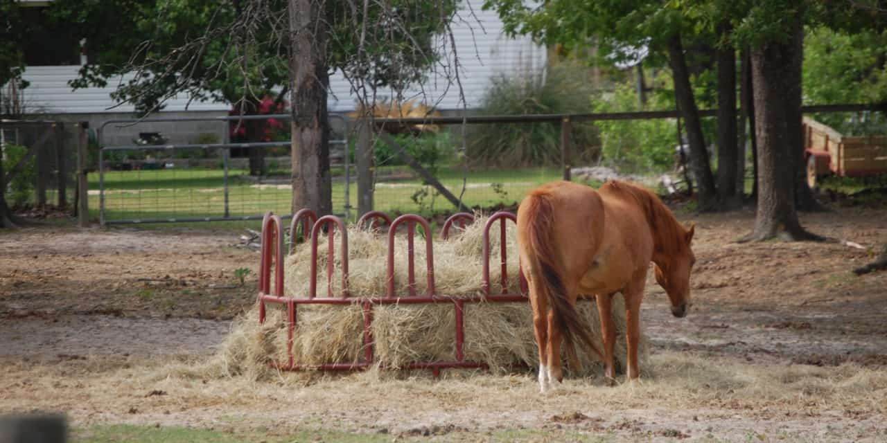 Hay Feeders Uncovered The Horse