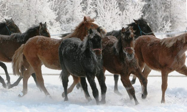 Most Foals Do Well in Cold Environments