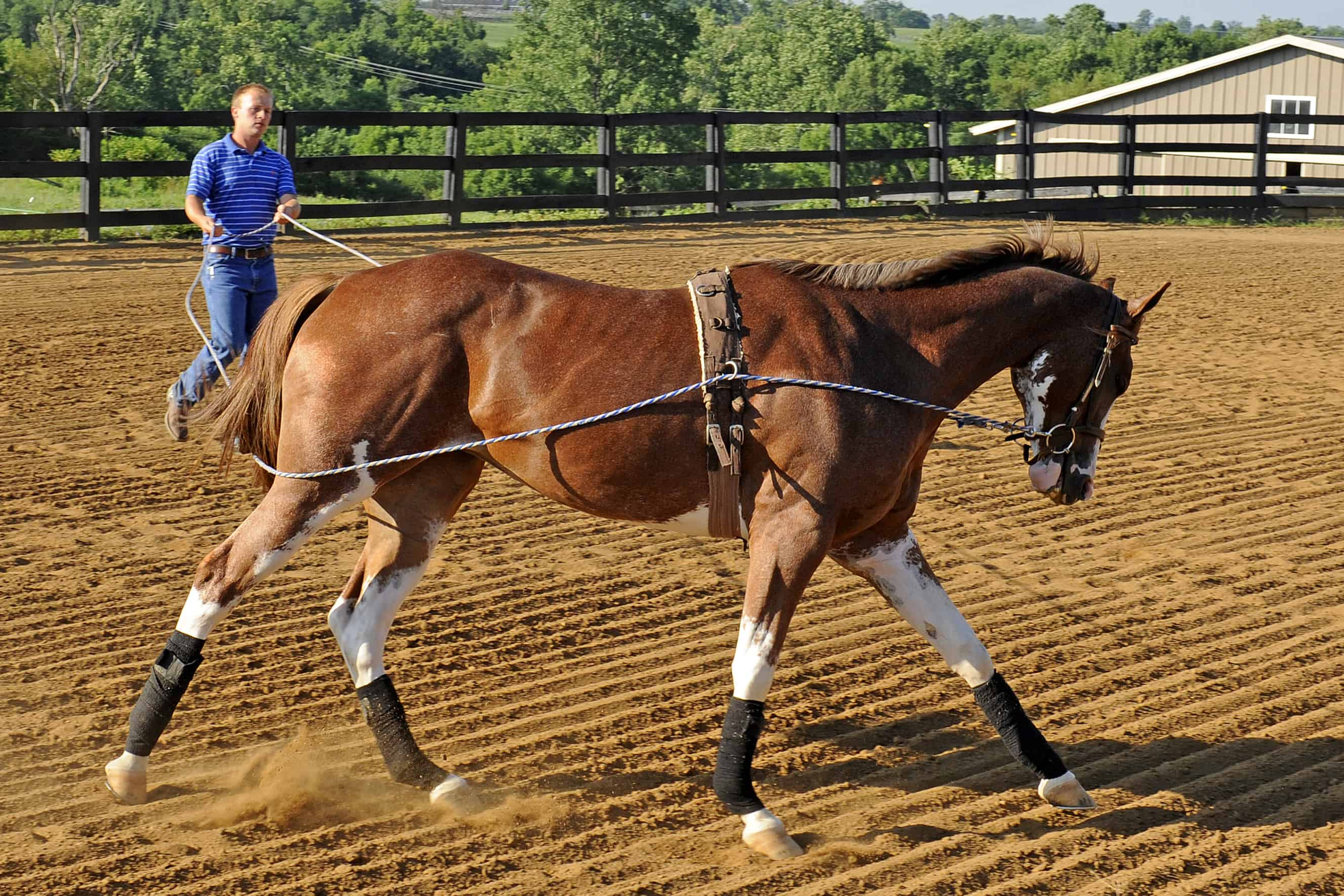 How Young is Too Young to Start a Horse Under Saddle