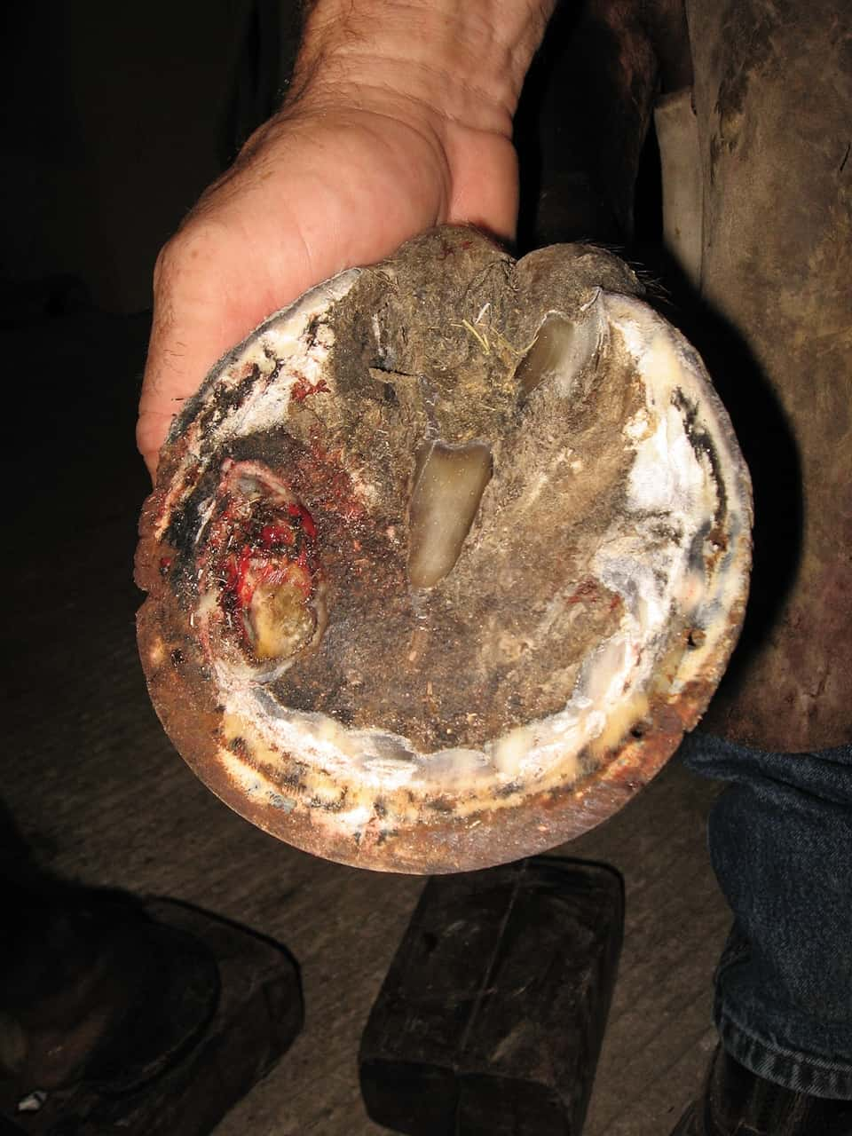 Hoof Abscess Advice