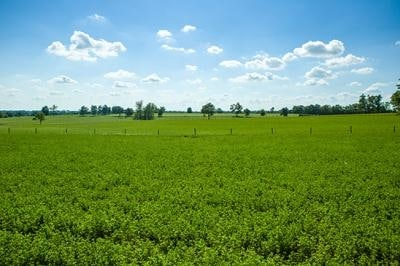 Kentucky Alfalfa, Stored Forage Conference Scheduled