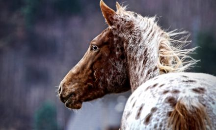 What's Behind Horses' White Spots?