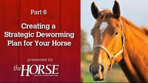 Deworming Part 6: Creating a Strategic Deworming Plan