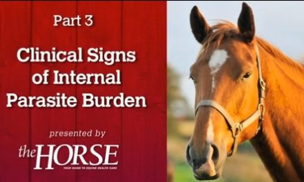 Deworming Part 3: Clinical Signs of Internal Parasite Burden