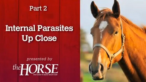 Deworming, Part 2: Internal Parasites Up Close