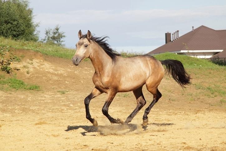 Superb Common Horse Coat Colors