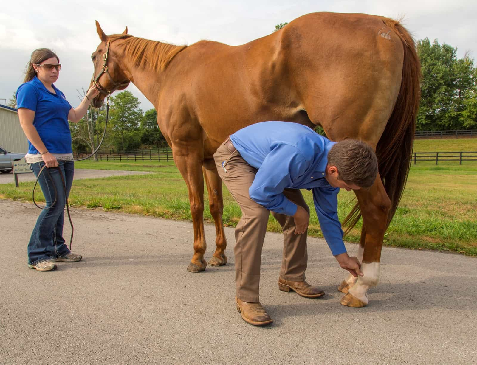 Safe Horse Handling for Vet Visits – The Horse