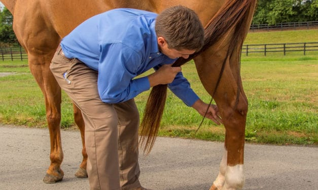 Hoof Conformation, Balance, and Hind-Limb Lameness in Horses