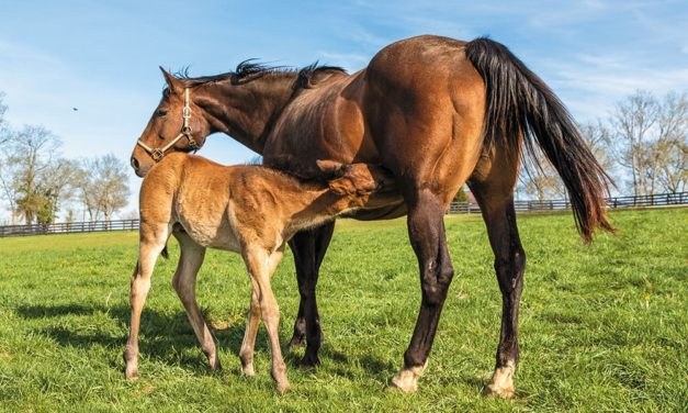 Stall or Pasture: Where Should Your Mare Foal?