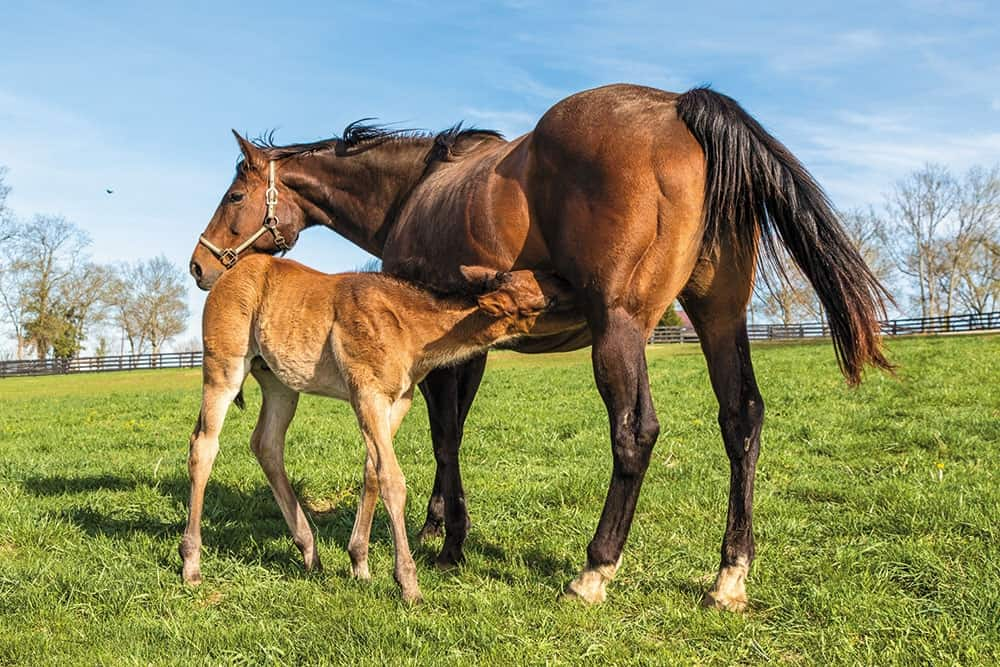 Stall or Pasture? Where Should Your Mare Foal?