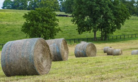 Selecting Hay for Your Horse: Fact vs. Fiction