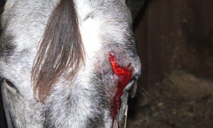 WVC 2013: Equine Wound Management
