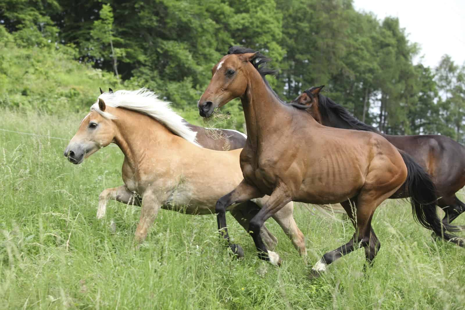 Variations In Horse Conformation The Horse,White Sweet Potato Pie