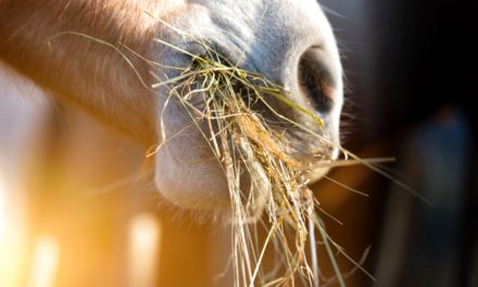 Is Coastal or Bermuda Hay Safe for Horses?
