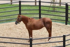 Video: How Big of a Drylot Does a Horse Need?