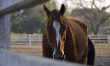 Biomarkers: The Future of Equine Pain Diagnosis and Prevention?