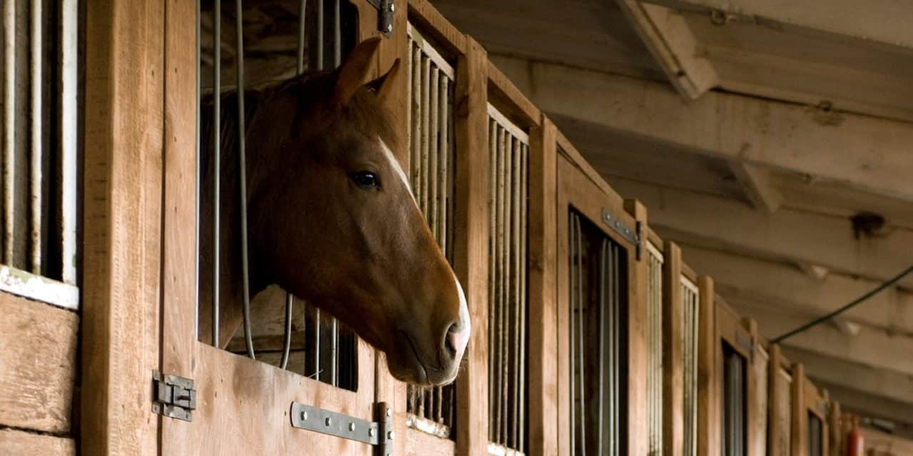 Equine Infectious Disease Outbreak Response 101 – The Horse
