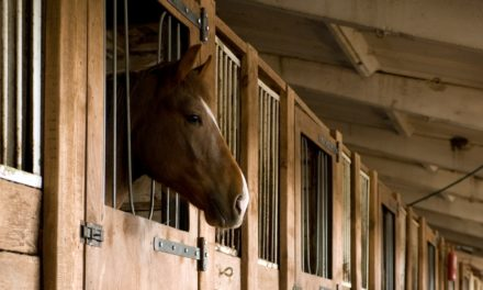 Respiratory Infections and Recovery in Horses