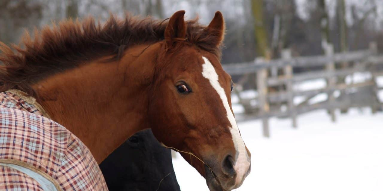 Horses Need Proper Feeding in Winter