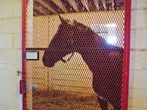 horse isolated in stall