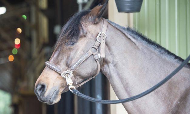 What's New in Equine Estrus Manipulation