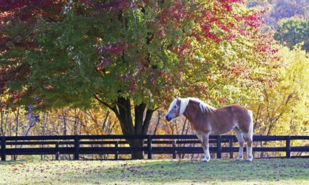 Fall in Place: Create a Winter Paddock