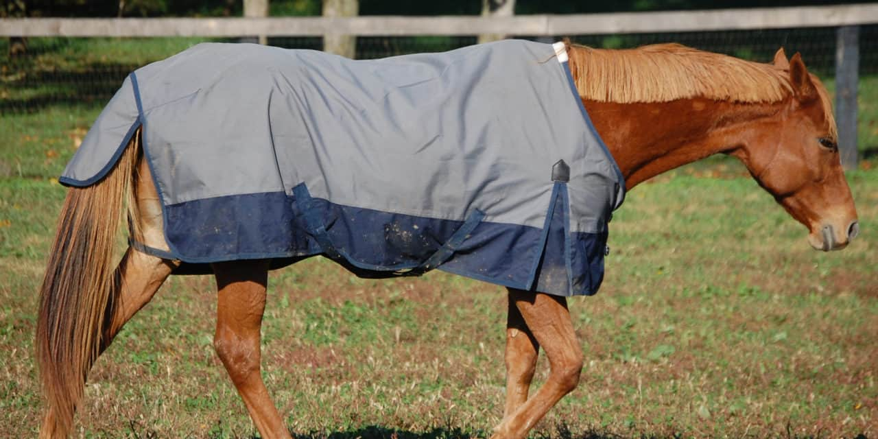 How to choose a horse blanket the horse how to choose a horse blanket fandeluxe Gallery