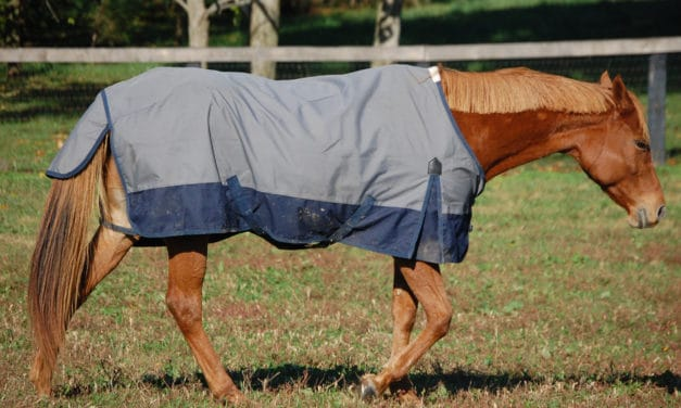 How to Choose a Horse Blanket