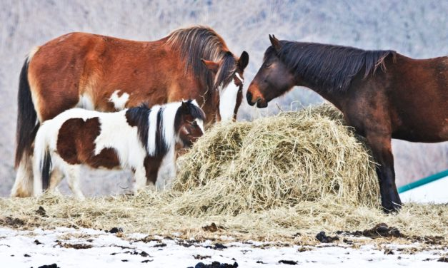 Help Your Horse Weather Winter