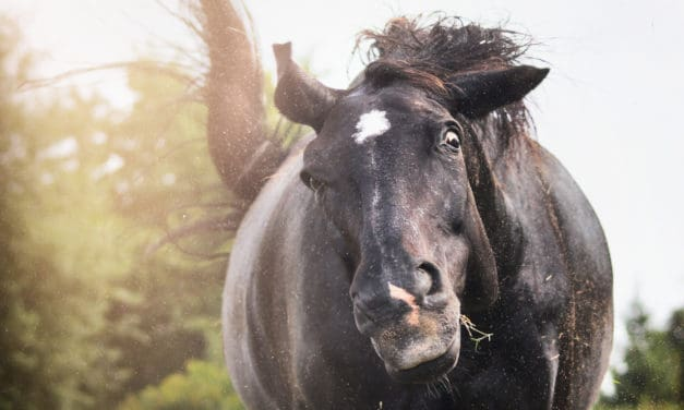 Poll Recap: Headshaking Horses