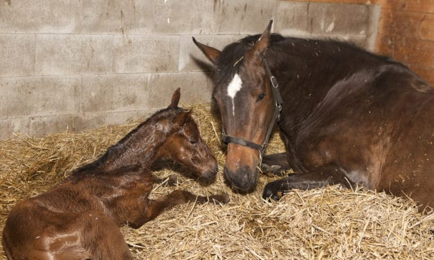 10 Foal Care Resources on TheHorse.com
