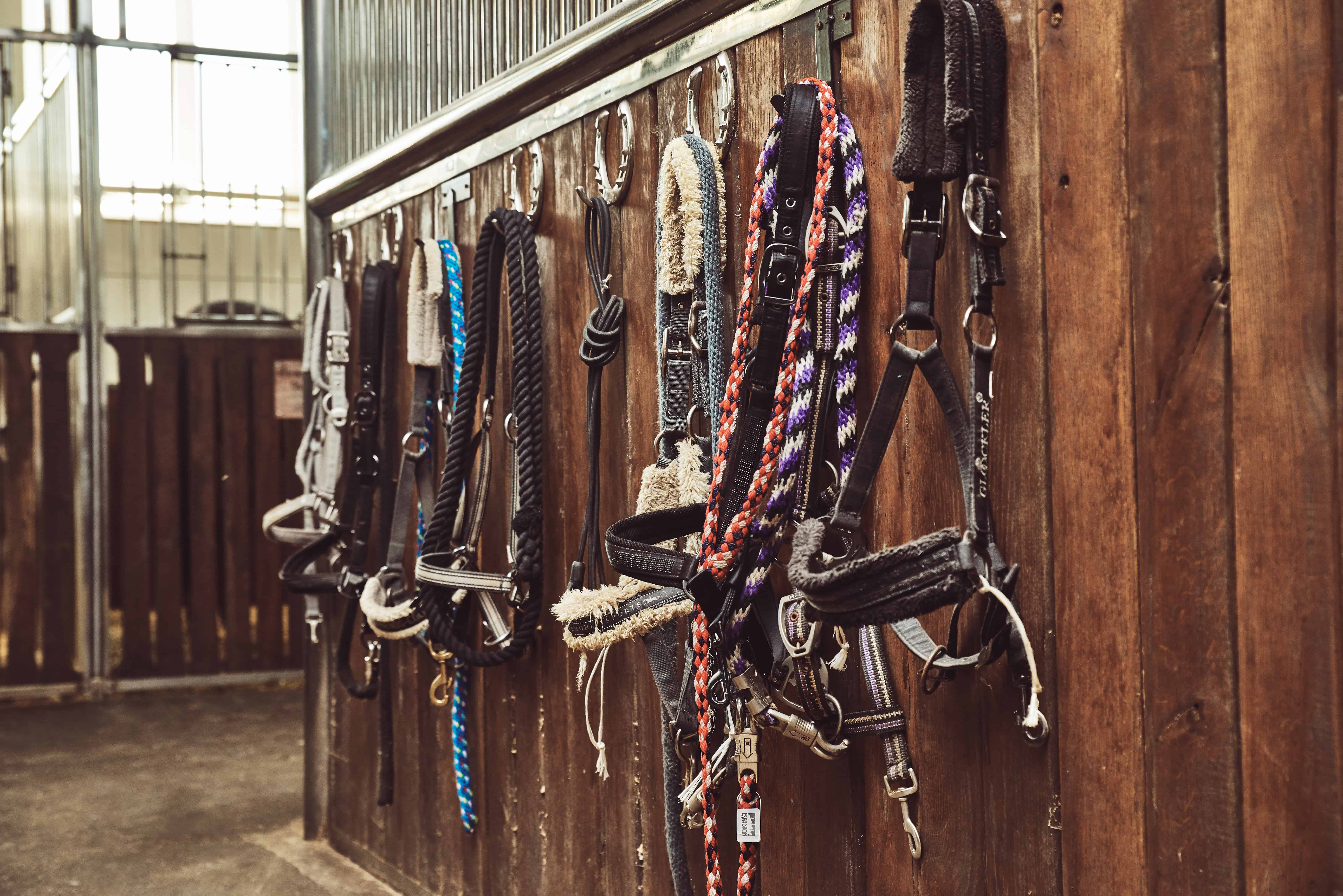 Pay Close Attention to Nylon Halters, Leads During Post-Strangles Cleaning