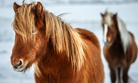Assessing Horse Well-Being With the 'Five Domains'