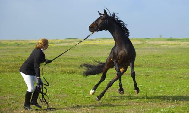 A Horse's Stifled Senses