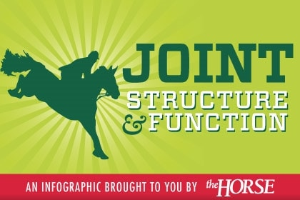 Infographic: Equine Joint Structure and Function