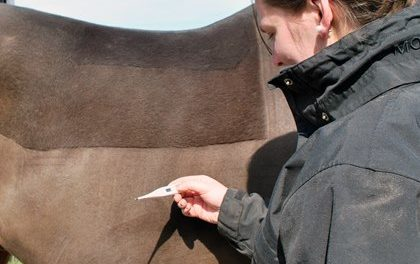 My Horse Has a Fever: Now What?
