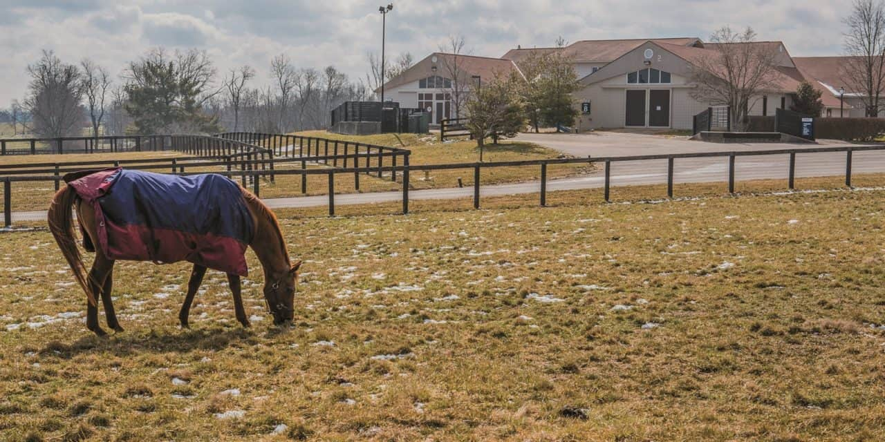 Hagyard Equine Medical Institute Merges With MAVANA