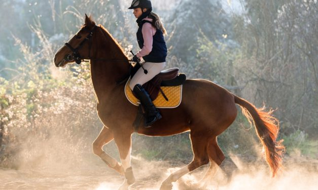 Managing the Anxious Horse