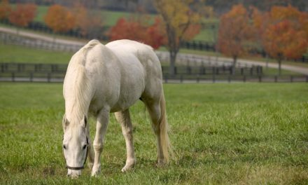 Retirement Planning: Optimizing Your Horse's Post-Career Care