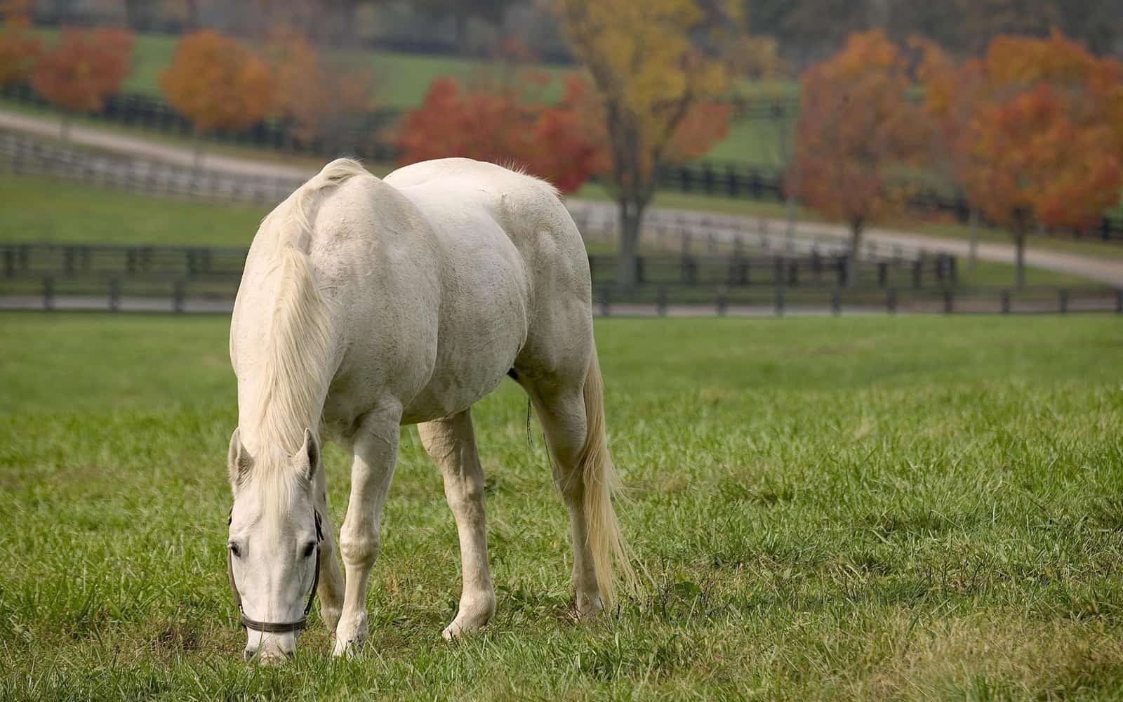 Caring For Senior Horses What To Remember The Horse