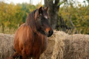 Equine Metabolic Issues: What are the Differences? (Ask TheHorse Live Q&A)