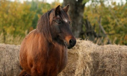 The Best Forage for Insulin Resistant Horses