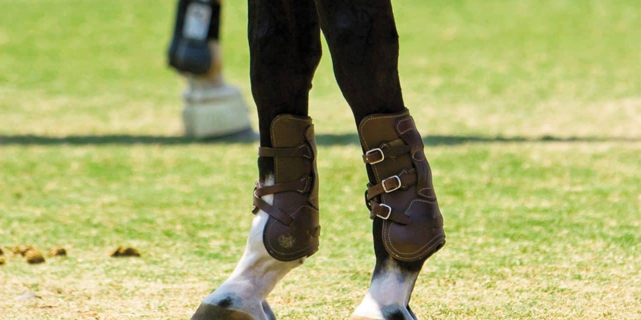 Study Boots Wraps Increase Leg Heat During Exercise The Horse