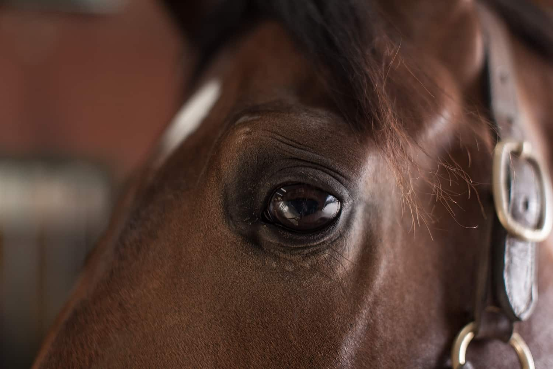 Rabies In Horse - HD1500×1000