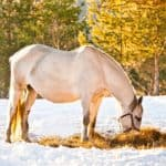 How to Be a Vigilant Broodmare Owner