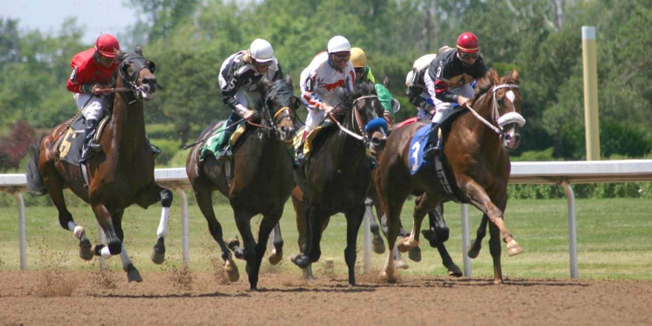 Why are american thoroughbreds racing less frequently the horse why are american thoroughbreds racing less frequently falaconquin