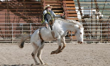 How Vets can Treat 'Untouchable' Horses