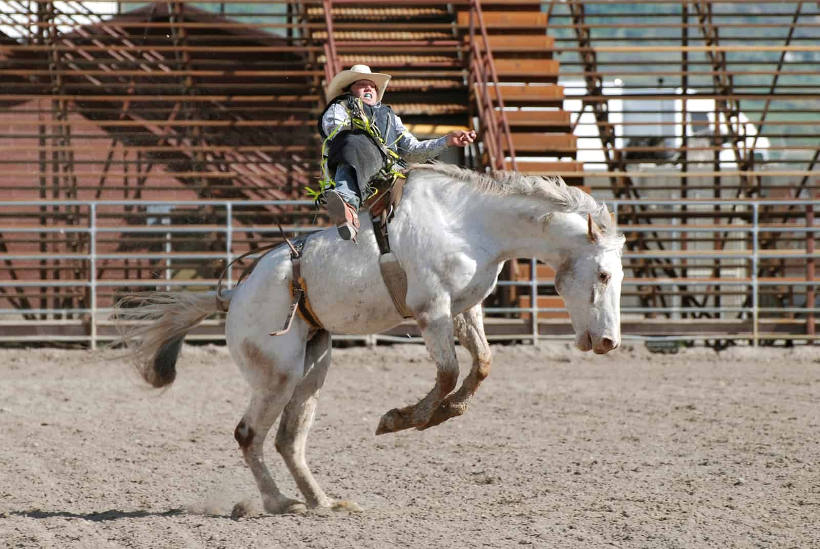 How Veterinarians Care for Top Rodeo Horses – The Horse